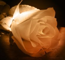 A Rose by taasia