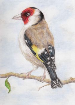 Goldfinch on a Branch by Sivia