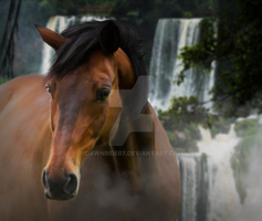 Horse Waterfall Profile by DawnRider7
