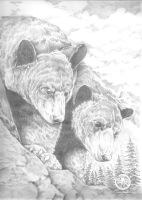 Bears by Batman4art