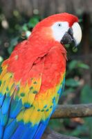 Macaw by oh-juliet
