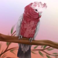 Galah by LilyT-Art
