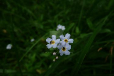 Flowers with bugs by Lidusha