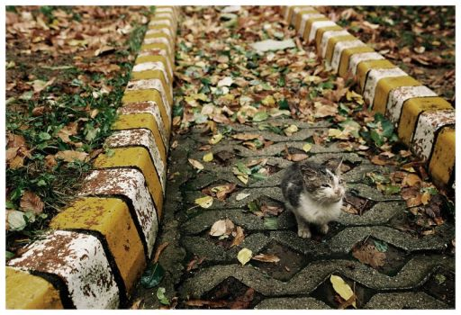 cat on road by freakme