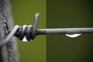 diptych by Chechipe