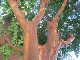 Tree with nifty colored bark by FennecFoxen