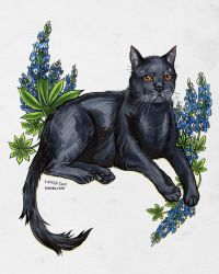 Iggy and Bluebonnets by Kiriska