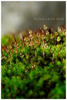 Moss Forest by Raymaker
