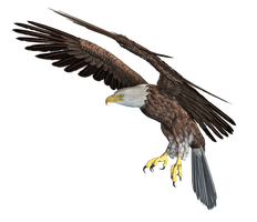 Eagle 03 PNG Stock by Roy3D
