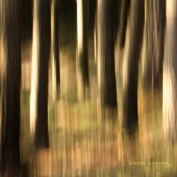 Forest of confusion by Healzo