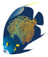 French Angel Fish by puka23