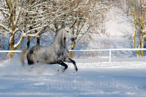 Joy in the snow IV by amisiux