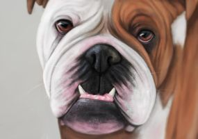 Bulldog by lilyhosegood