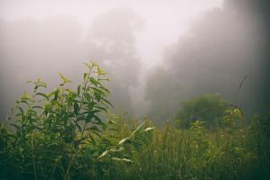 Fog by BlackRoomPhoto