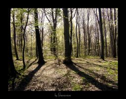 Beyond the Great Vast Forest by Guenieviere