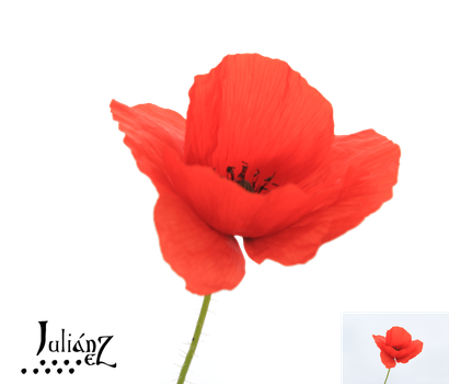 Poppy4 by Julianez