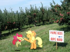 The apples are ready! by HAchaosagent