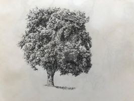 Inking Trees by Scribbling by cmkloes