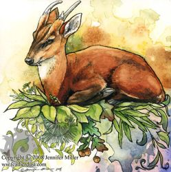 Reeves' Muntjac by Nambroth