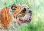 Bulldog II by AlbinaDiamond
