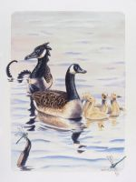 Canada Goose Family by Hbruton