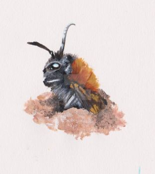Grey Patch Mining Bee Study by Helena998