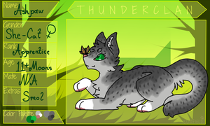 Ashpaw || Thunderclan ( OLD ) by Imperial-x-Conquest