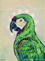 Macaw Mandala by Dreamspirit