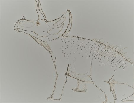 triceratops horridus by theropodrex