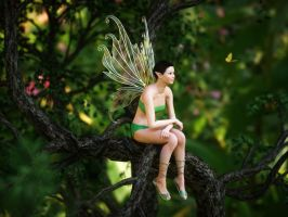 Forest fairy on tree branch by pnn32