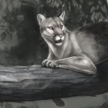 Greyscale panther by Noctualis