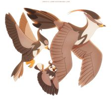 Staravia Starly and Staraptor
