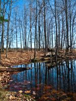 Mirror in the Earth by LAPoetry-n-Photo