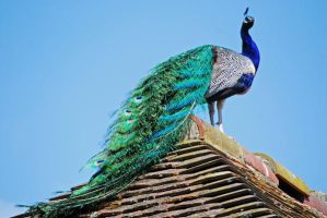 King of Groombridge by CitizenJustin