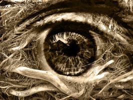 the eye of the forest by DJBronx