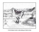 E is for Eskimo Curlew by Melaninny