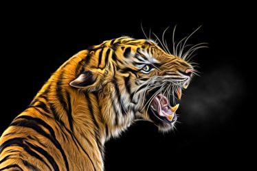Tiger by ditney
