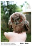 Owl on Hand by Della-Stock