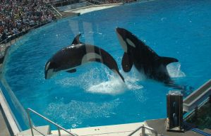 shamu by loveaemily