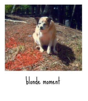 Blonde Moment by SineadCatherine