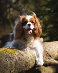 Log Dog II by Sara-Roth