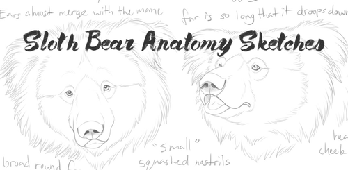 Sloth bear anatomy sketches by Bear-hybrid