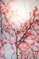 Springs Coming, 2 by Alyphoto