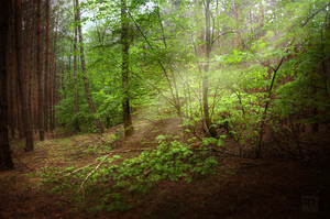 Magical Spring Forest 1 by FilipR8