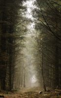 A walk in the forest. by Hiiakay