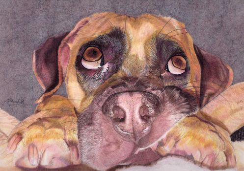 Colour Pencil Spud the Puggle by mchurchill1982