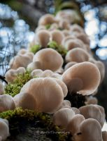 Tree of fungi by kayaksailor