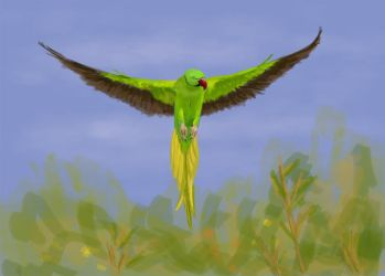 Parrot by Warr3