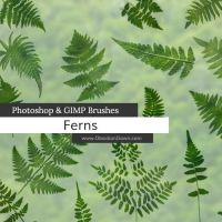 Ferns Photoshop and GIMP Brushes by redheadstock