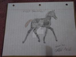 CCF StormHeart As a Foal by CalliesKennel